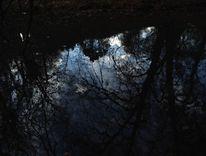 Zweig, Ufer, Wasser, Fotografie