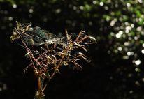 Natur, Herbst, Filigran, Spinnennetz