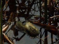 Schilf, Teich, Spiegelung, Weidenkätzchen