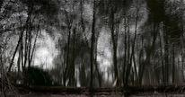 Optische täuschung, Wald, See, Spiegelung