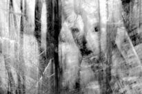 Schnee, Winter, Wald, Frost