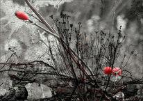 Rot, Schwarz, Grau, Fotografie