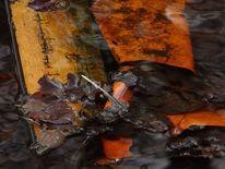 Wasser, Oker, Blätter, See