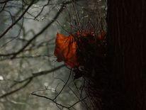 Zweig, Baum, Gegenlicht, Blätter