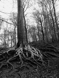 Baum, Energie, Wurzel, Fotografie