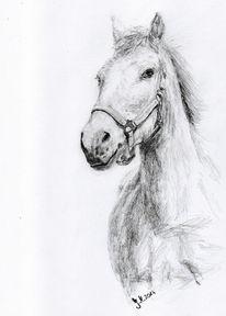 Reiten, Zeichnung, Pferdeportrait, Bleistiftzeichnung