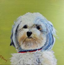 Dackel, Hund trixi, Malteser, Kleiner hund