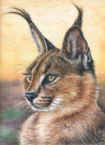 Wildkatze, Katze, Aquarellmalerei, Afrika