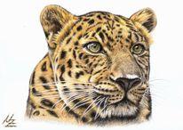 Tiere, Realismus, Zeichnung, Katze