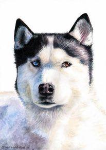 Augen, Hundeaugen, Malerei, Hund