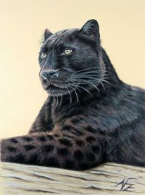 Portrait, Katze, Schwarz, Jaguar