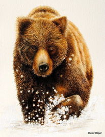 Tiere, Bär, Aquarell, Namen