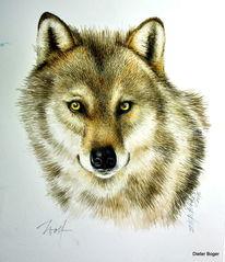 Studie, Aquarellmalerei, Wolf, Aquarell