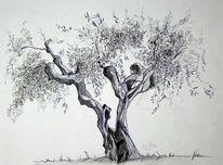 Zeichnungen, Italien, Olivenbaum