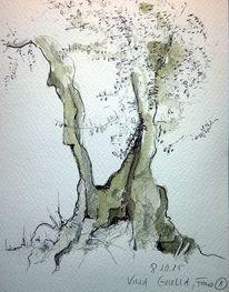 Aquarell, Villa, Italien, Olivenbaum