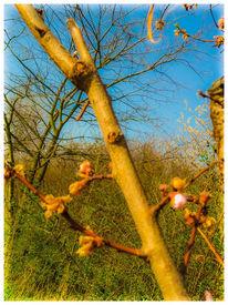 Frühling, Farben, Stille, Sonne