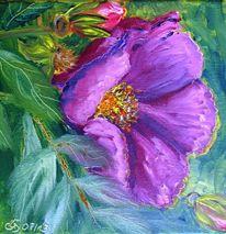 Buschwindrose, Blätter, Blumen, Sonne
