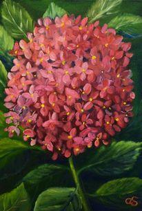 Pflanzen, Blüte, Hortensien, Natur