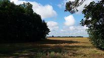 Schatten, Brandenburg, Gras, Ernte