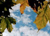 Blätter, Kastanien, Himmel, Wolken