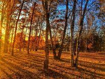 Reise, Wald, Herbst, Fernweh
