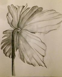 Pflanzen, Blüte, Schwarzweiß, Aquarell