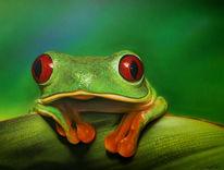 Rotaugenfrosch, Frosch, Laurusart, Airbrush
