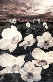 Narcissuses, Blumen, Inspiration, Schatten