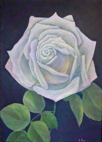 Rose, Stillleben, Acrylmalerei, Blumen