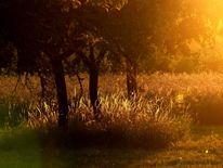 Abend, Gras, Baum, Gegenlicht