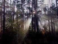 Sonne, Licht, Bestrahlt, Baum