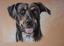 Hund, Tiere, Tierportrait, Tierzeichnung