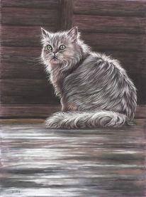 Katze, Dachboden, Persisch, Scheunenfund