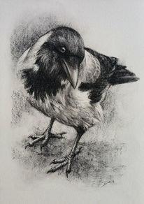 Hooded crow, Kohlezeichnung, Krähe, Aaskrähe
