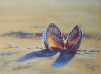 Muschel, Strand, Licht, Schatten