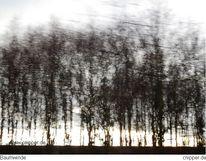 Baum, Natur, Baumwinde, Wind