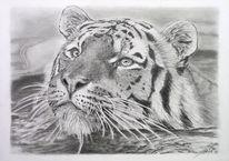 Swimming tiger, Tiere, Bleistiftzeichnung, Zeichnung