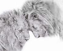 Löwe, Raubtier, Zeichnung, Tiere