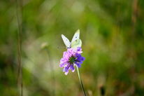 Insekten, Sommer, Libelle, Blüte