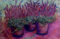 Blumen, Heidekraut, Herbst, Violett