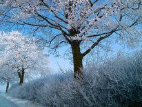 Licht, Baum, Busch, Winter