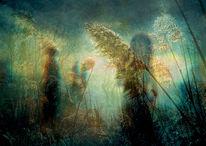 Wärme, Baum, Gras, Nebel
