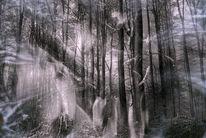 Wald, Stamm, Busch, Wolken