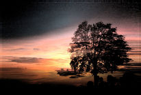 Baum, Schatten, Wolken, Schleier