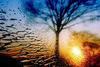 Fahrt, Regen, Licht, Pflanzen