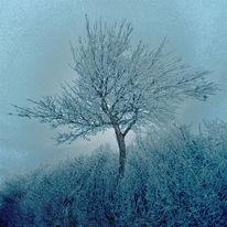 Eis, Himmel, Baum, Schnee
