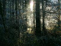 Strauch, Krone, Winter, Wald