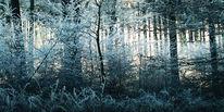 Zweig, Sonne, Schnee, Baum