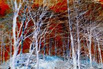 Zweig, Eis, Wolken, Winter