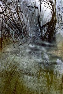 Gewässer, Zweig, Spiegekungen, Wald